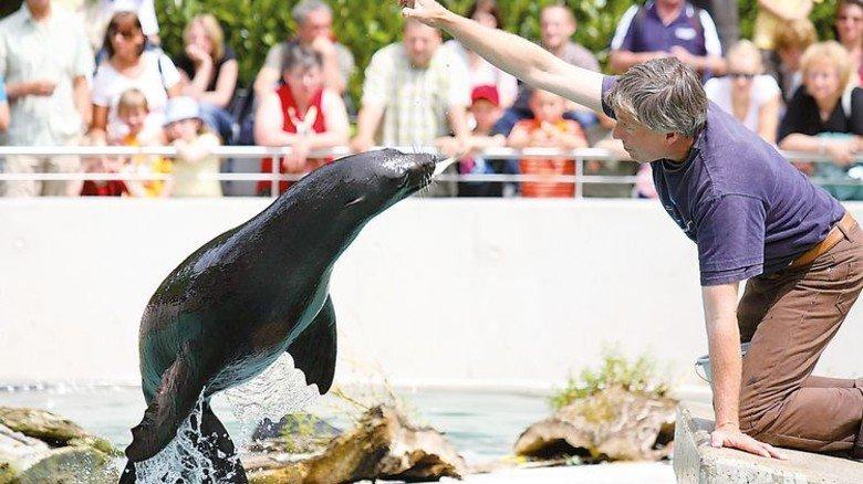 Fisch-Fan: Ein Seehund spielt mit seinem Pfleger im Augsburger Zoo. Foto: Zoo Augsburg
