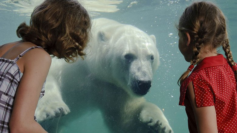 Auf Tuchfühlung: Im Erlebnis-Zoo Hannover kommen Besucher den Tieren besonder nah.