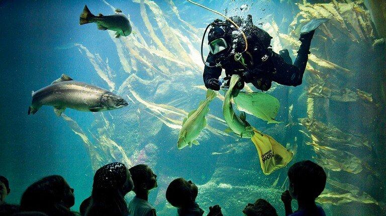 Fütterung der Fische: Den Tauchern kann man durch eine Panoramascheibe zuschauen.