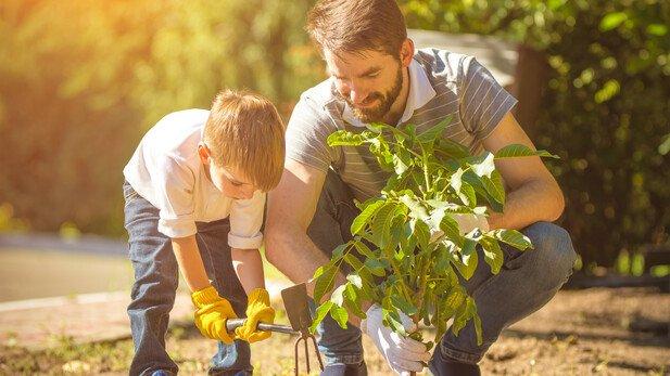 Achtung: Mal eben ein Bäumchen pflanzen? Das kann später Ärger geben.