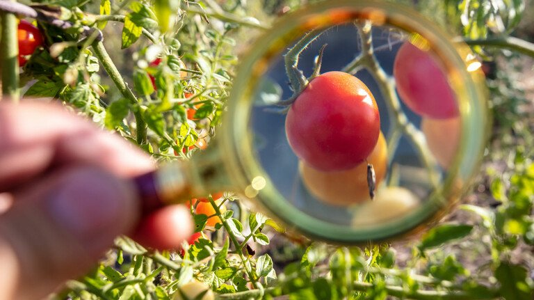 Unter der Lupe: Manche Gemüsesorten enthalten natürliche Schadstoffe, die man auf den ersten Blick nicht sehen kann – von denen man aber wissen sollte.