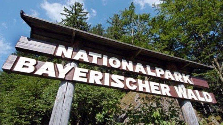 1970: Der Nationalpark Bayerischer Wald wird gegründet – der erste Deutschlands. Foto: dpa
