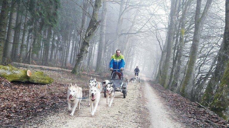 Rasante Fahrt: Mit Huskys über die winterliche Ostalb.