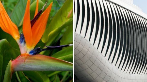 Foto links: fotolia. Foto rechts: Architekten: Soma Architecture, Wien; Ingenieure: Knippers Helbig, Stuttgart; Soma