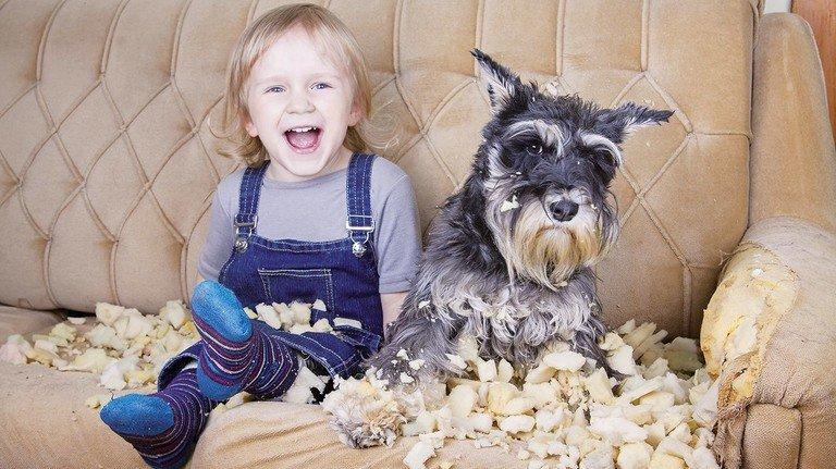Papa, Papa, guck mal, was unser Hund da gemacht hat! Ist ja irgendwie schon süß – aber: Wer zahlt jetzt Nachbars Sofa?!