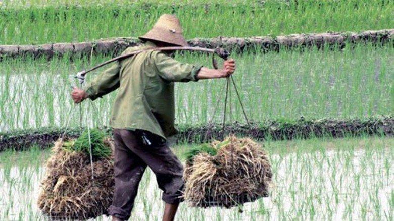 Knapp daneben: Der Reisbauer ist nicht gemeint. Foto: dpa