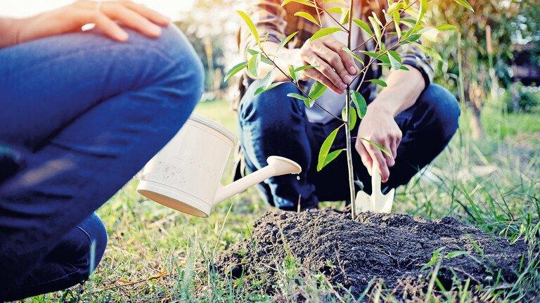 Ein neuer Baum: Apfel- und Birnen-Setzlinge lassen sich sehr gut im Frühling pflanzen.