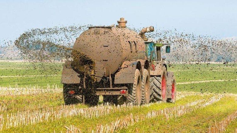 Das stinkt gleich gewaltig: Gülle wird auf einen Acker gesprüht. Foto: Fotolia