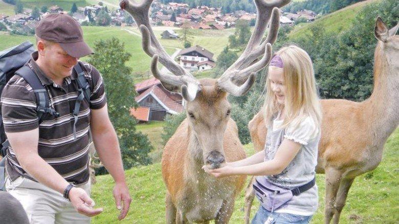 Obermaiselstein: Besucher dürfen einige der Tiere füttern und streicheln. Foto: Alpenwildpark Obermaiselstein