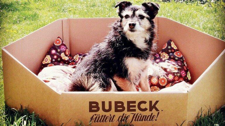 Kann als Hundekorb genutzt werden: Eine spezielle Versandbox für Hundeleckerli von Bubeck als Marketingaktion. Dafür gab es nun den zweiten Platz in der Kategorie E-Commerce.