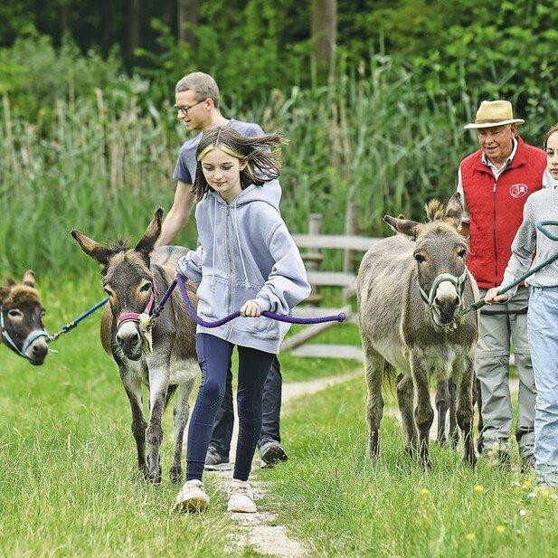 Spaziergang als Team: Auch für Jugendliche ist das Wandern mit den Eseln ein ganz besonderes Erlebnis.