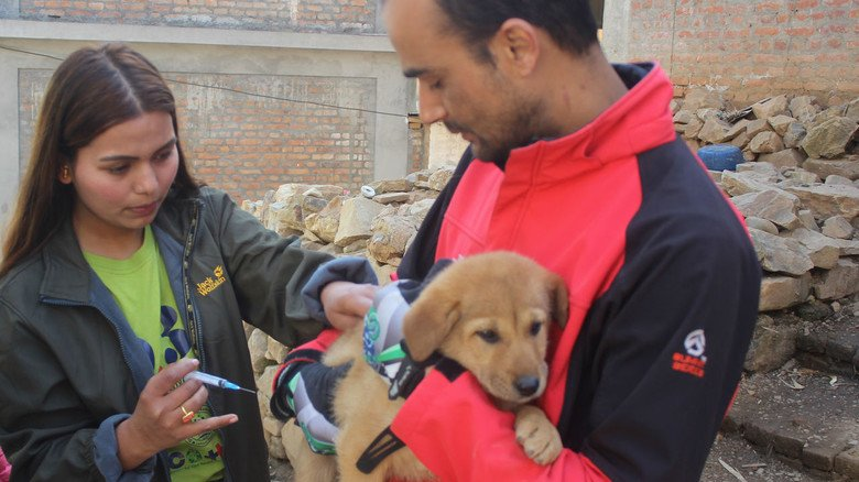 Schnell und nahezu schmerzlos: Eine Impfung schützt die Hunde vor Ansteckung.