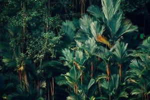 Ein Weg aus dem Dschungel der Weiterbildungen